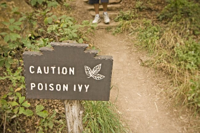 Caution Poison IVY wooden signboard